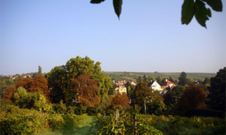 Döbling Bäume (c) stadtbekannt.at