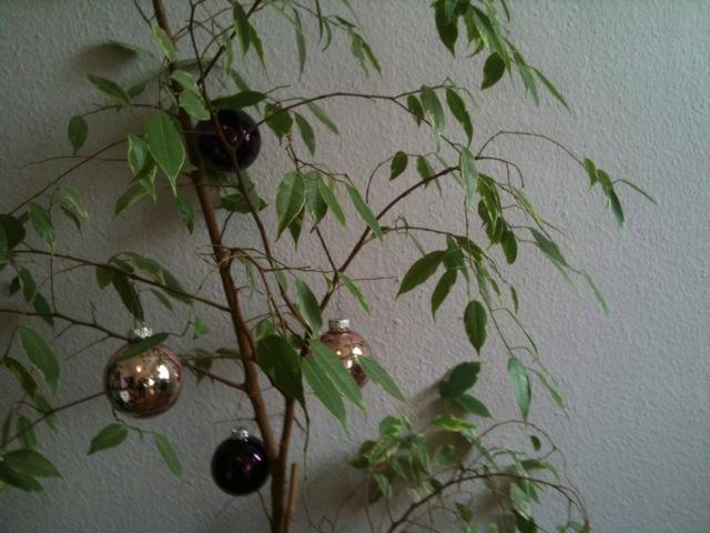 Zimmerpflanze (c) STADTBEKANNT