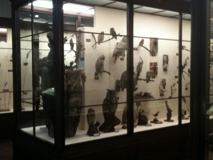 NHM Naturhistorische Museum Vögel