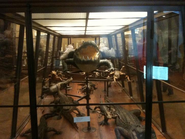 NHM Naturhistorische Museum Krokodile