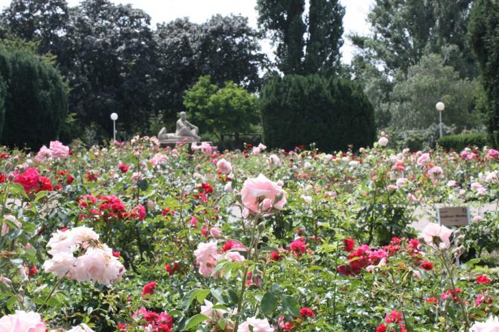 Rosarium Wettsteinpark