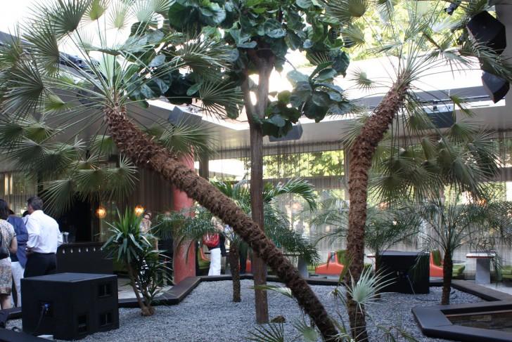 Volksgarten Palmen