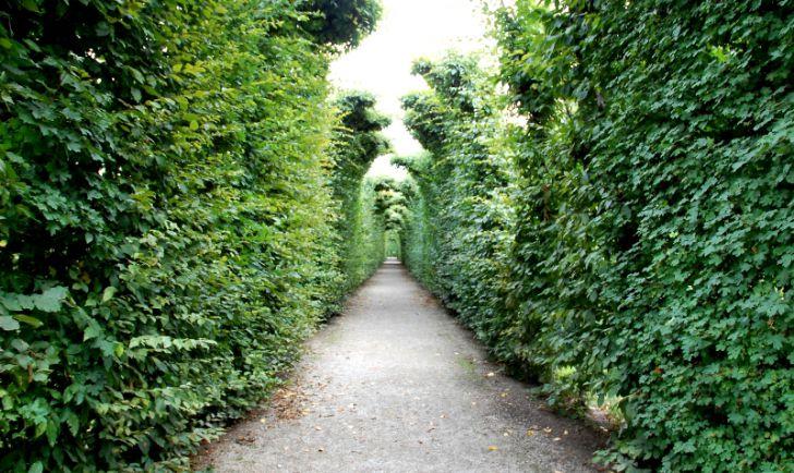 Irrgarten Schönbrunn (c) STADTBEKANNT