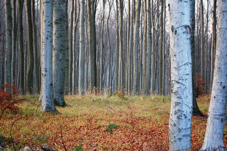 Wiener Wald Foto: stadtbekannt.at