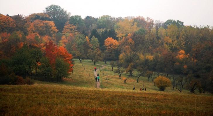 Steinhofgründe im Herbst