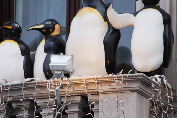 Fundstück Pinguine