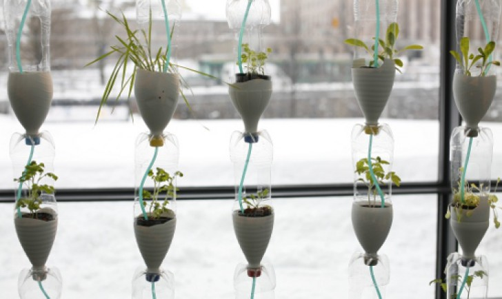 Window Farming (c) organicnutrients.co