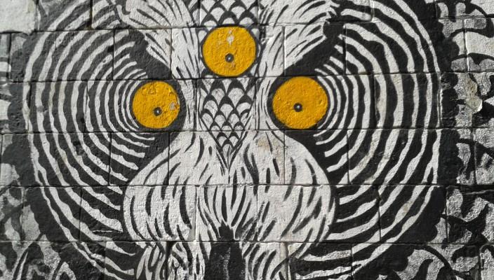 Got Owl?