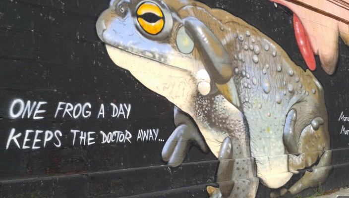 One frog a day, keeps the doctor away!