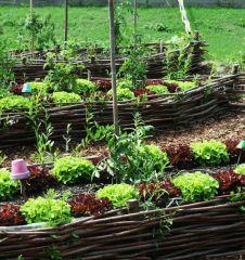 Beet Asia Salat (c) City Farm Schönbrunn