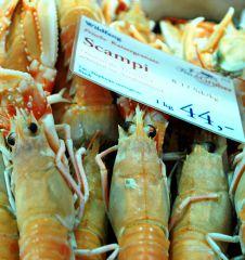 Fisch Gruber Scampi (c) STADTBEKANNT