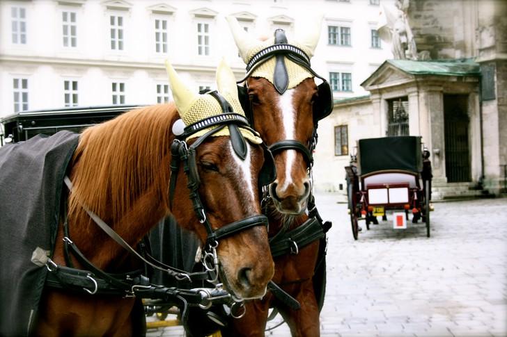 Fiaker Pferde (c)stadtbekannt.at