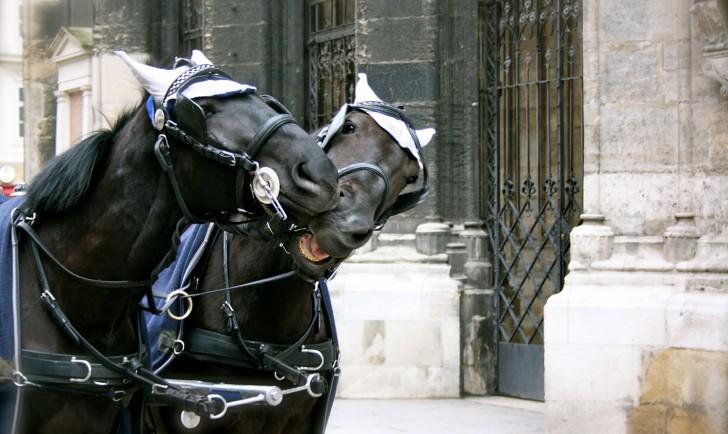 Fiaker Pferde (c) STADTBEKANNT Nohl
