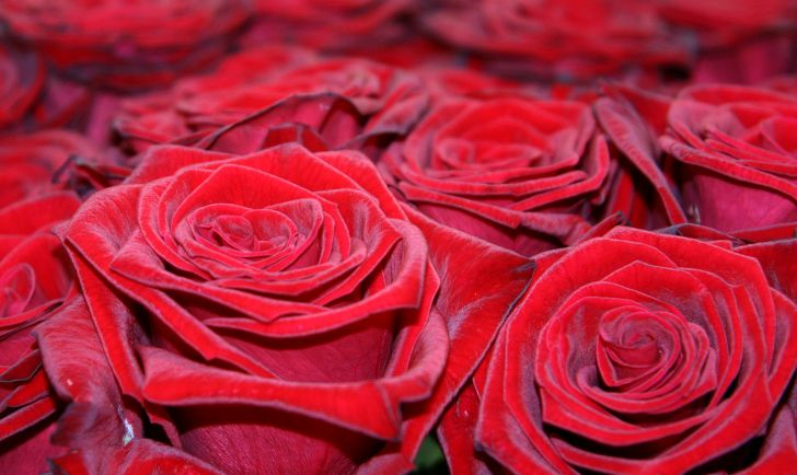 Rote Rosen (c) stadtbekannt.at