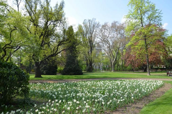 Wiener Rathauspark weiße Blumen (c) stadtbekannt.at