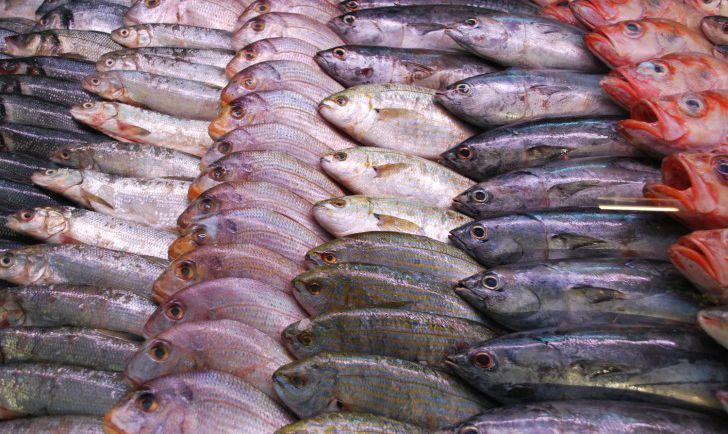 Fische (c) stadtbekannt.at