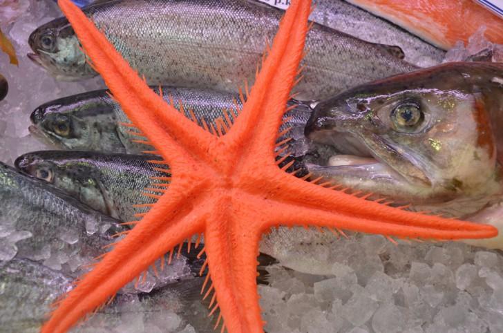 Vorgartenmarkt Fisch (c) Mautner stadtbekannt.at
