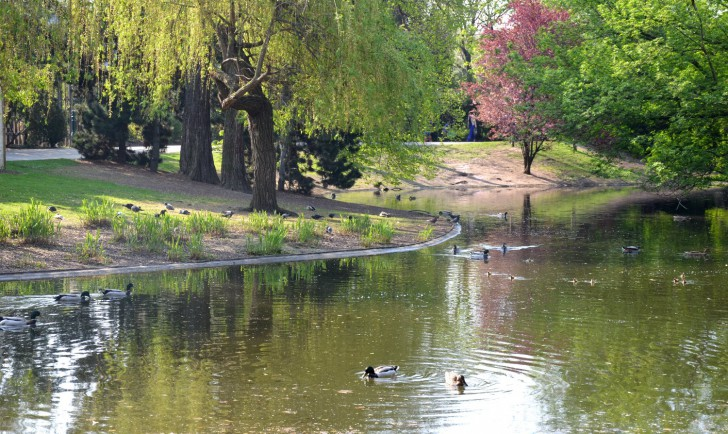 Wiener Stadtpark Teich (c) STADTBEKANNT