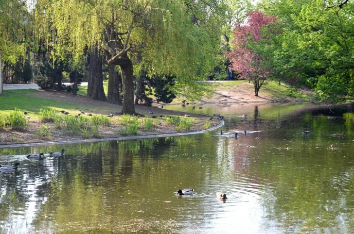 Stadtpark Ententeich (c) STADTBEKANNT