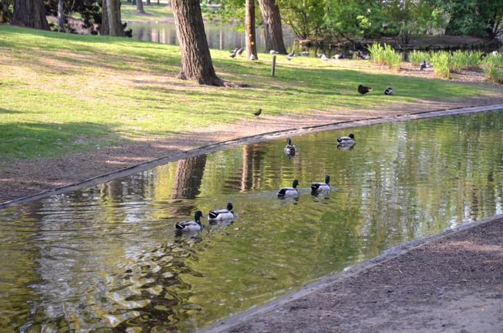 Ententeich Stadtpark (c) Mautner stadtbekannt.at
