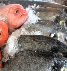Brunnenmarkt Fische (c) Mautner stadtbekannt.at