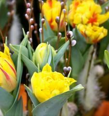 Blumenhaus Hietzing (c) Nohl stadtbekannt