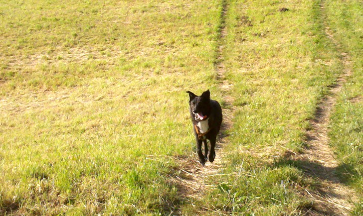 Hund (c) stadtbekannt.at