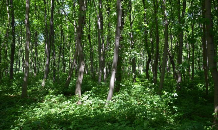 Wiener Prater Wald (c) stadtbekannt.at