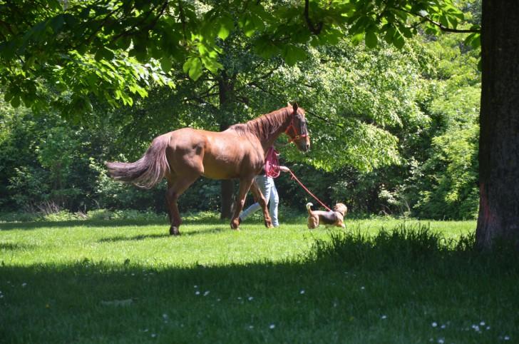 Pferd und Hund (c) Mautner stadtbekannt.at