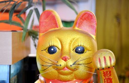 Hitomi Sushi Katze (c) stadtbekannt.at