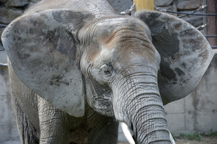 Tiergarten Schönbrunn Elefant (c) Mautner stadtbekannt.at