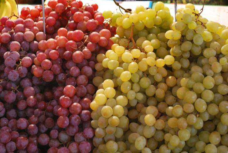 Weintrauben (c) Mautner stadtbekannt.at