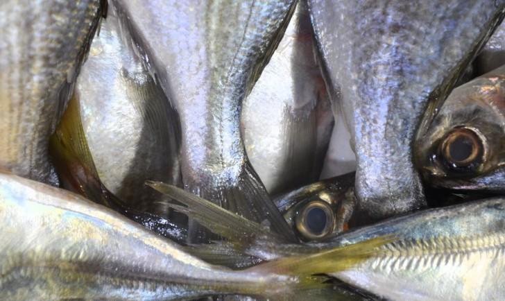 Meiselmarkt Fische (c) Mautner stadtbekannt.at