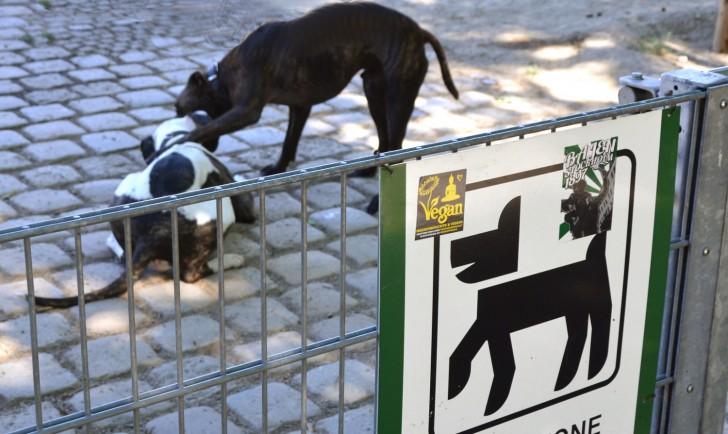 Hundezone (c) Mautner stadtbekannt.at