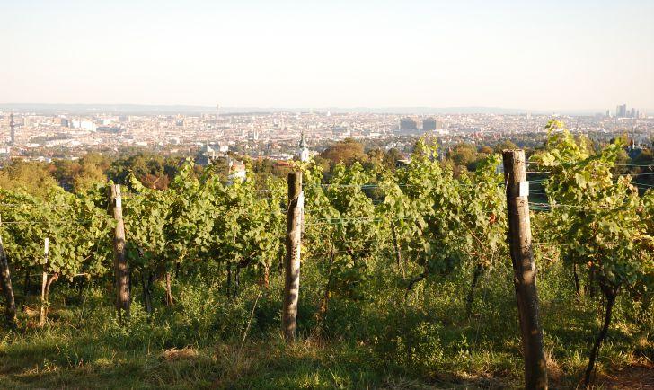 Wiener Wein (c) stadtbekannt.at