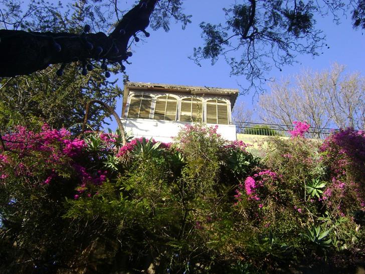 Madeira Blumenpracht (c) Engstler stadtbekannt.at