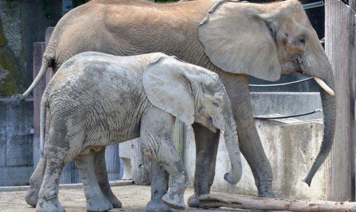 Elefanten (c) Mautner stadtbekannt.at