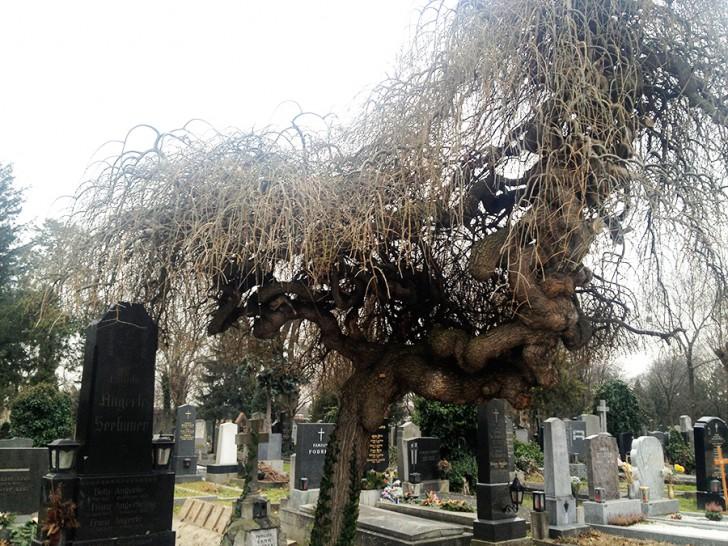 Zentralfriedhof Baum (c) stadtbekannt.at