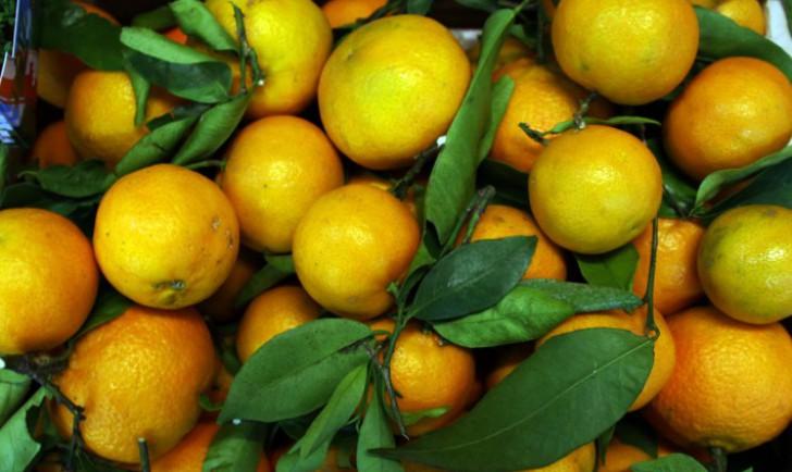 Orangen (c) STADTBEKANNT
