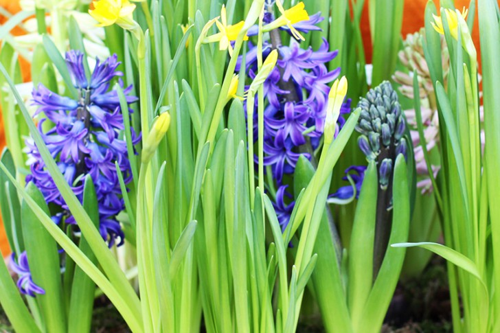 Blumen (c) STADTBEKANNT