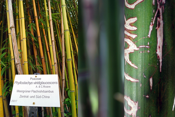 Fasanviertel botanischer Garten (c) STADTBEKANNT Zohmann