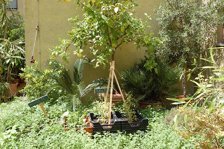 Wem es im Büro zu stickig wird, der kann im hauseigenen Garten nach dem Gemüse sehen oder sich dort entspannen.