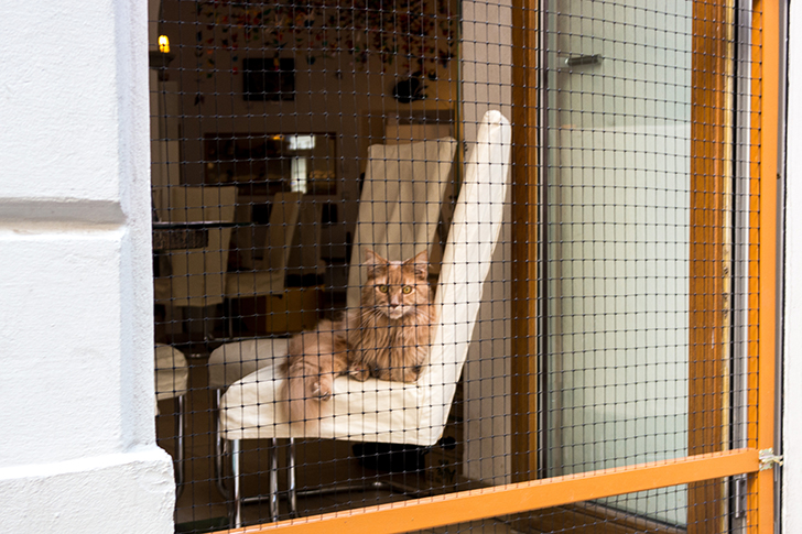 Ballgasse Katzencafe (c) STADTBEKANNT Zohmann