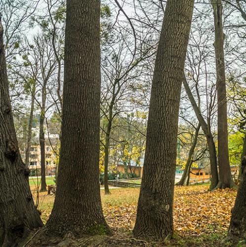 Poetzleinsdorfer Schlosspark Wald (c) STADTBEKANNT Zohmann