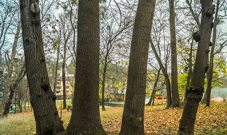 Poetzleinsdorfer Schlosspark Wald (c) STADTBEKANNT