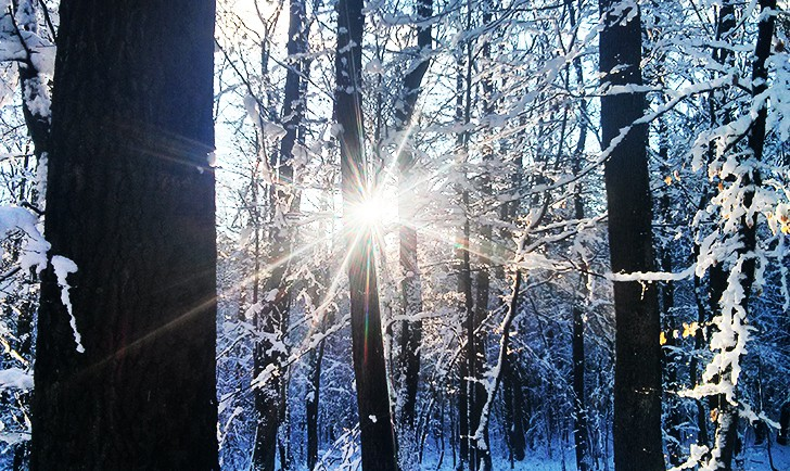 Wohin in Wien Schnee Wald (c) STADTBEKANNT