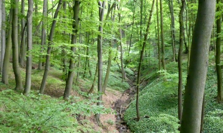 Wienerwaldbach (c) STADTBEKANNT