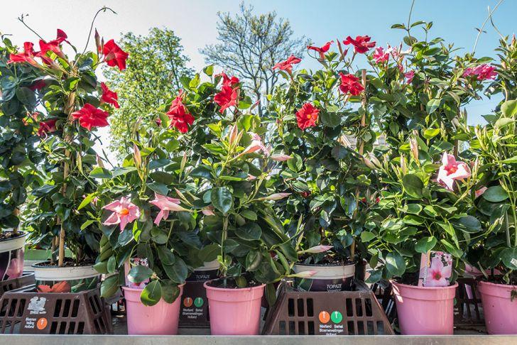 Garten Weilinger Blumen (c) STADTBEKANNT