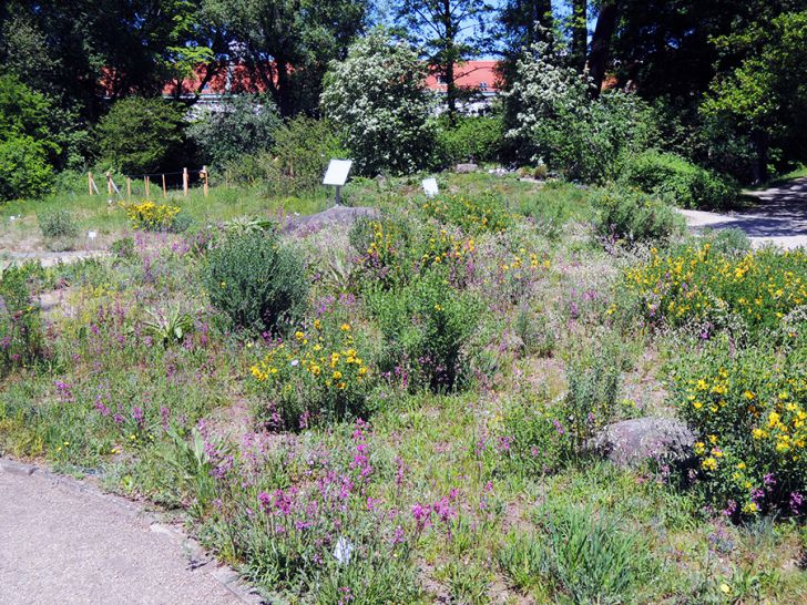 Botanischer Garten Wien Pflanzenwelt (c) STADTBEKANNT