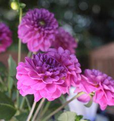 Blumen Garten (c) STADTBEKANNT